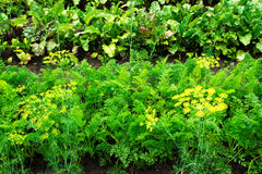 Vegetable patches Stock Photo