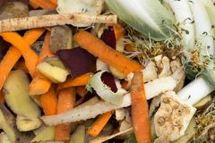 Vegetable peelings in composting pile stock photography