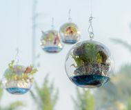 Vegetable plant decorate in sphere glass Stock Image