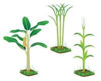 Vegetable plant Royalty Free Stock Photo
