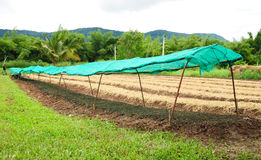 Vegetable plantation in Thailand Royalty Free Stock Photos