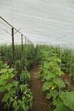 Vegetable plantation stock photos
