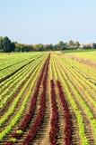 Vegetable planting Stock Photo