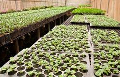 Vegetable planting in modern farm Stock Image