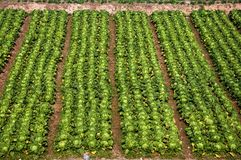 Vegetable plot Stock Photography