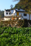 Vegetable plot in chinese village Stock Images