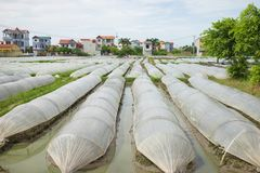 Vegetable plot covered by plastic paper in suburb of Hanoi city.  Royalty Free Stock Photo