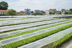 Vegetable plot covered by plastic paper in suburb of Hanoi city.  Royalty Free Stock Photos