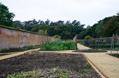 Vegetable plot in English walled garden Stock Photo