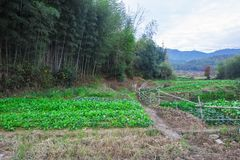 The vegetable plot at the foot of the pastoral landscape. The vegetable plot at the foot of the pastoral scenery was shot in huangshan, anhui Royalty Free Stock Images