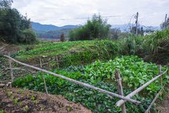 The vegetable plot at the foot of the pastoral landscape. The vegetable plot at the foot of the pastoral scenery was shot in huangshan, anhui Stock Photo