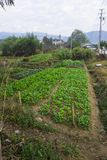 The vegetable plot at the foot of the pastoral landscape. The vegetable plot at the foot of the pastoral scenery was shot in huangshan, anhui Stock Images