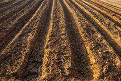 Vegetable plot Royalty Free Stock Image
