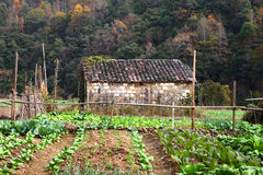 Vegetable plot in village XiCun,Wuyuan Stock Photo