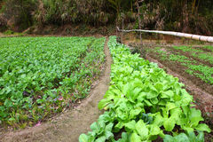 Vegetable plot in village ,YanCun,Wuyuan Royalty Free Stock Images
