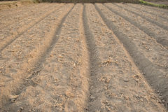 Vegetable plots on agriculture field in suburbs Stock Photo