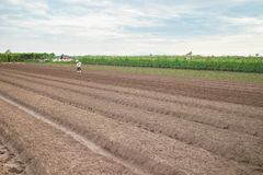 Vegetable plots on agriculture field in suburbs of Hanoi, Vietnam.  Stock Image