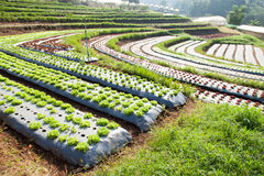 Vegetable plots Royalty Free Stock Photo