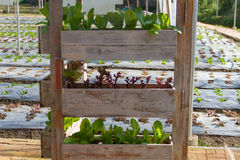 Vegetable plots salad Stock Photos