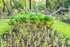 Vegetable plots of vegetables Royalty Free Stock Image