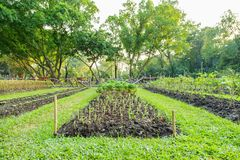 Vegetable plots of vegetables Stock Photography