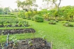 Vegetable plots of vegetables Stock Images
