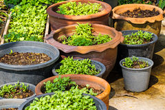 Vegetable pots with plants and seeds/planting/gardening Royalty Free Stock Photos