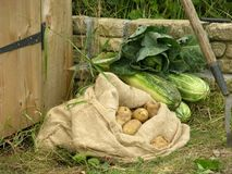 Vegetable Produce at shed door Stock Photo