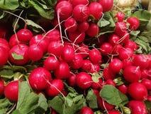 Vegetable - radishes bundled. For sale stock image