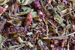 Vegetable raw materials for preparation of tea Royalty Free Stock Photo