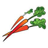 Vegetable red Carrot Stock Photo