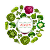Vegetable round symbol with cabbage veggies Royalty Free Stock Image