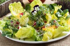 Vegetable salad with fresh microgreens, lettuce, corn salad, pom royalty free stock photos