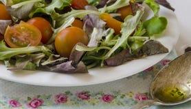 Vegetable salad greens Stock Photography