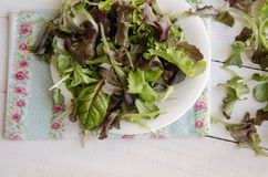 Vegetable salad greens Stock Image