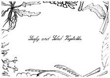 Hand Drawn of Leafy and Salad Vegetable Stock Photos