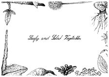 Hand Drawn of Leafy and Salad Vegetable Stock Image