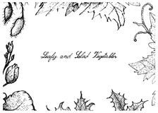 Hand Drawn of Leafy and Salad Vegetable Royalty Free Stock Photos