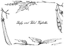 Hand Drawn of Leafy and Salad Vegetable Royalty Free Stock Photo