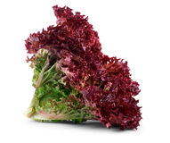 Vegetable salad lettuce Lollo Rosso isolated on white background. Sheet of curly violet lettuce Royalty Free Stock Photos