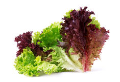 Vegetable salad lettuce Lollo Rosso isolated on white background Royalty Free Stock Photo