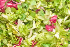 Vegetable salad mix Royalty Free Stock Photography