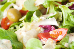 Salad close up Royalty Free Stock Photo
