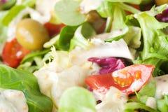 Salad close up Royalty Free Stock Photo