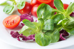 Vegetable salad with tomatoes and salad Stock Image