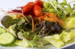 Vegetable salad. On white dish Royalty Free Stock Image