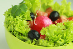 Free Vegetable Salad With Red Radish Stock Photo - 17692400