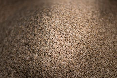 Vegetable Seed. Close-up of a lot of vegatable seed Royalty Free Stock Photos