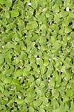 Vegetable seedling Stock Photos