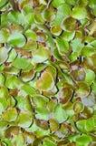 Vegetable seedling Stock Image